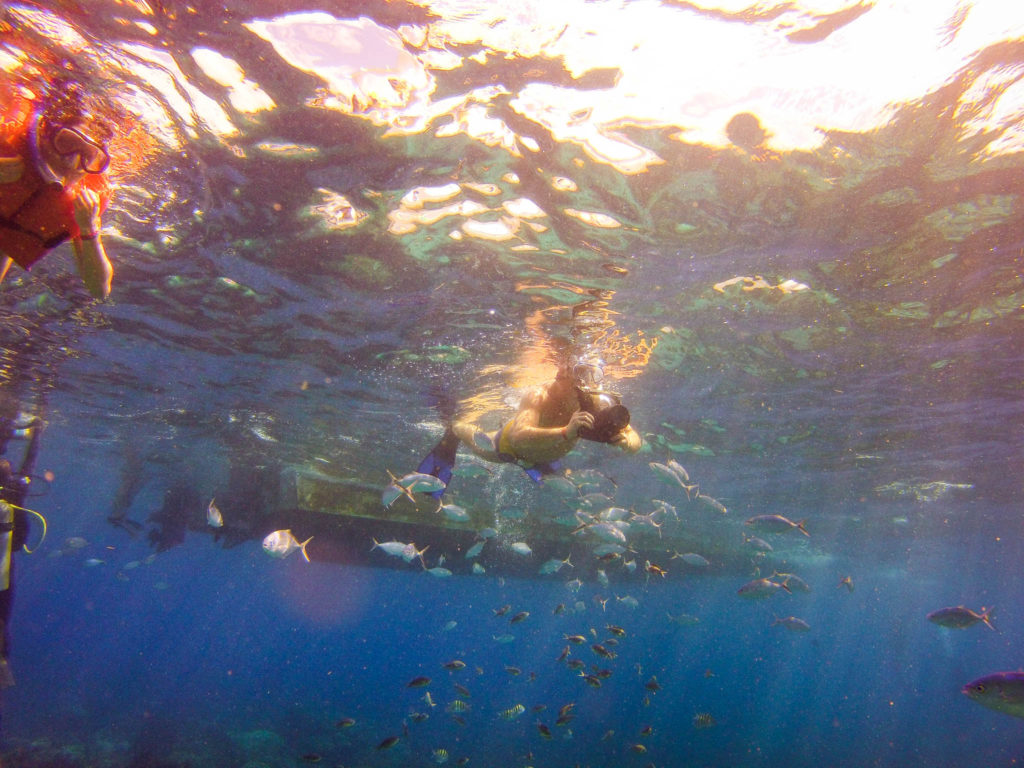 Catalina Island Snorkeling - Snorkeler taking photographs