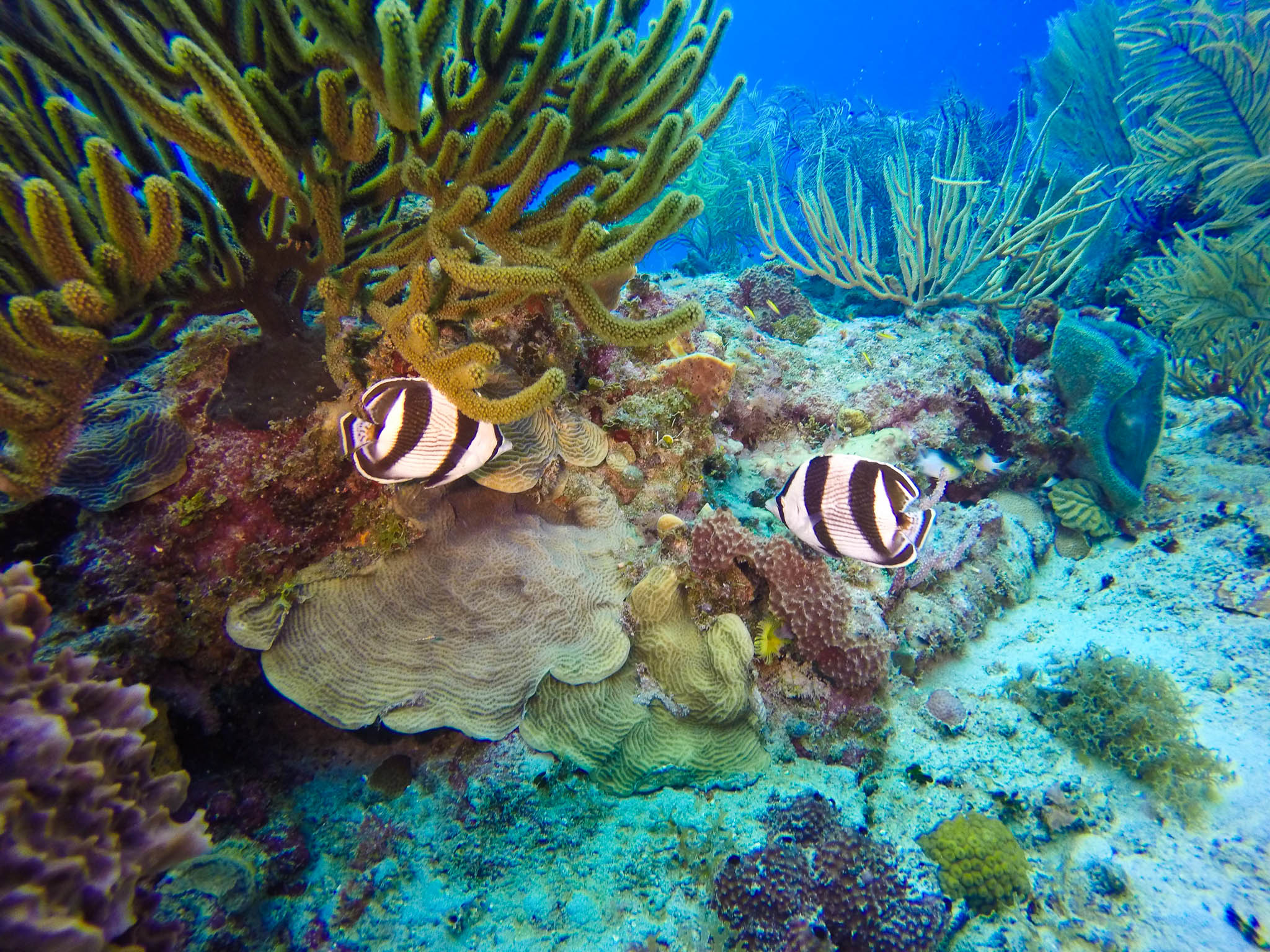 Catalina Island Diving & Snorkeling In The Dominican Republic