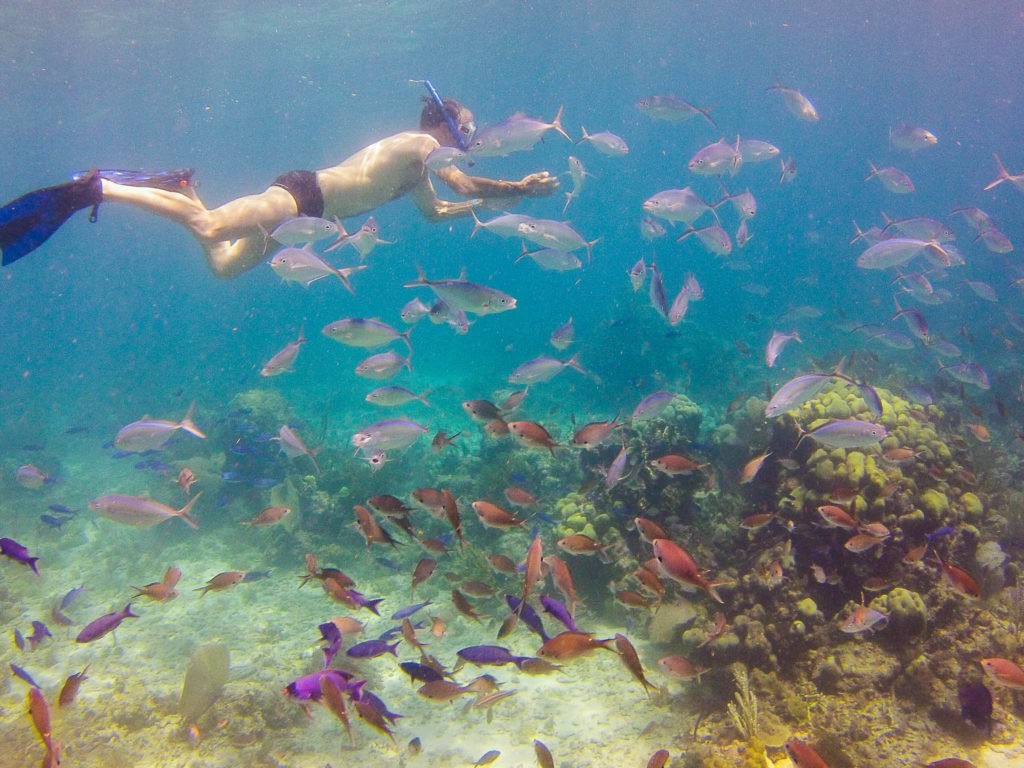 Snorkeler with many fish
