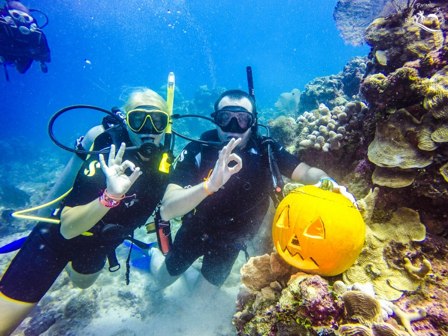 Passion Paradise Adventures team halloween pumpkin scuba diving off the Aquarium on the west side of Catalina Island with guests enjoying their photo being taken