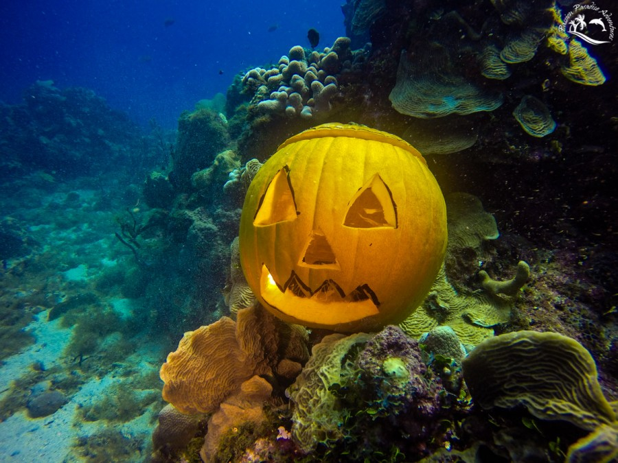 Our Passion Paradise Adventures team pumpkin scuba diving at the Aquarium