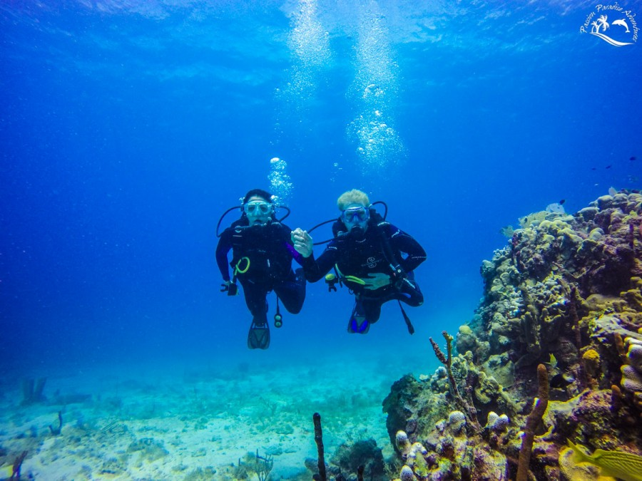 Josh and Erin enjoying their honeymoon scuba diving off Catalina Island with Passion Paradise Adventures