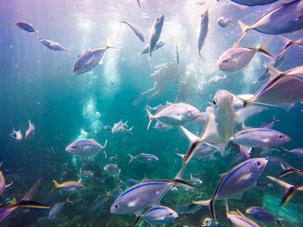 Catalina Island travel   California, USA - Lonely Planet
